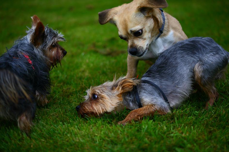 Cleo und ihre Freunde aus der Hundeschule