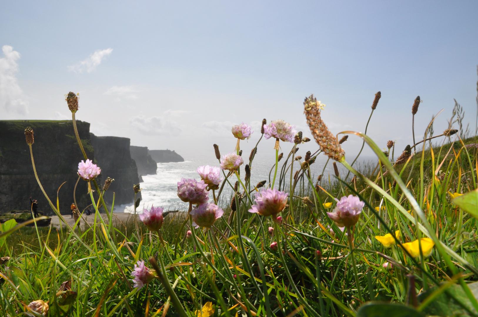 Cliffs of Moher - 05.2011 - H