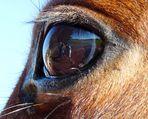 Clin d'œil équin