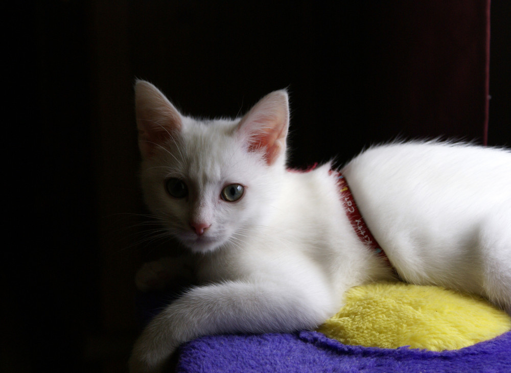 Câlin le chat