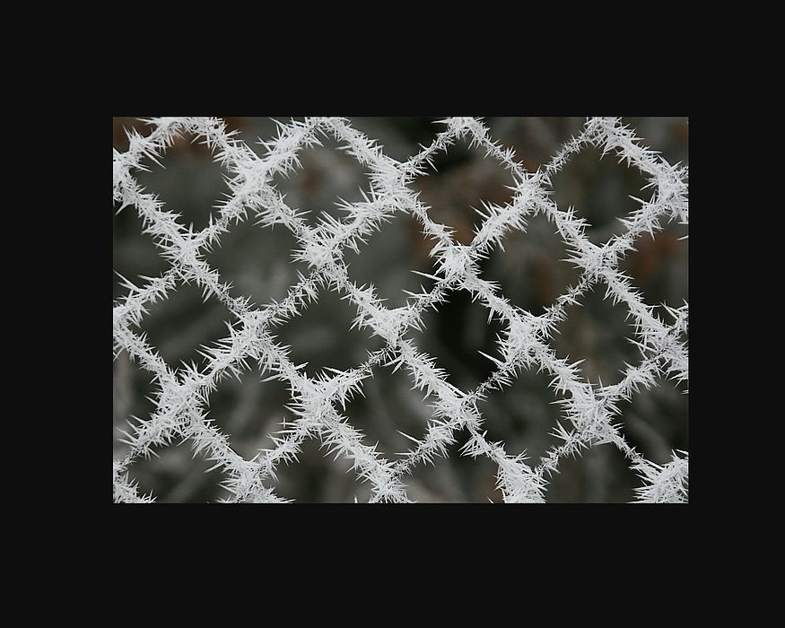 clôture d'un froid glacial