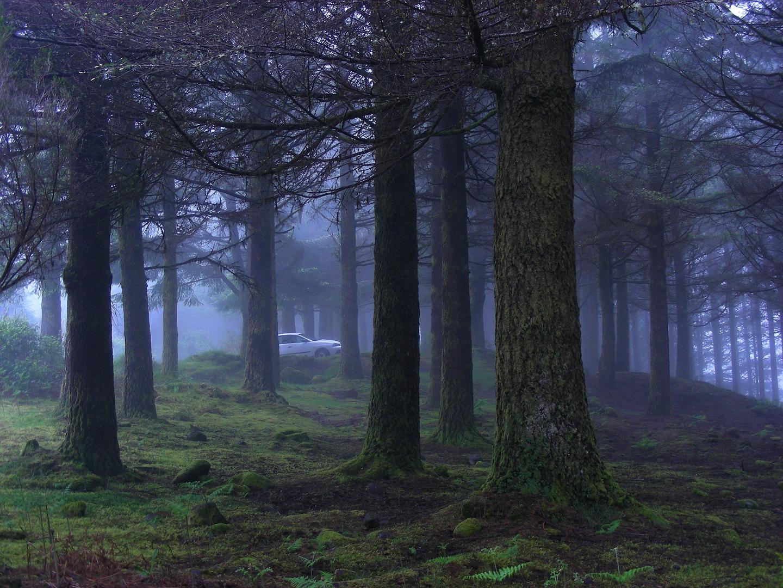 Cloud forest - Madeira