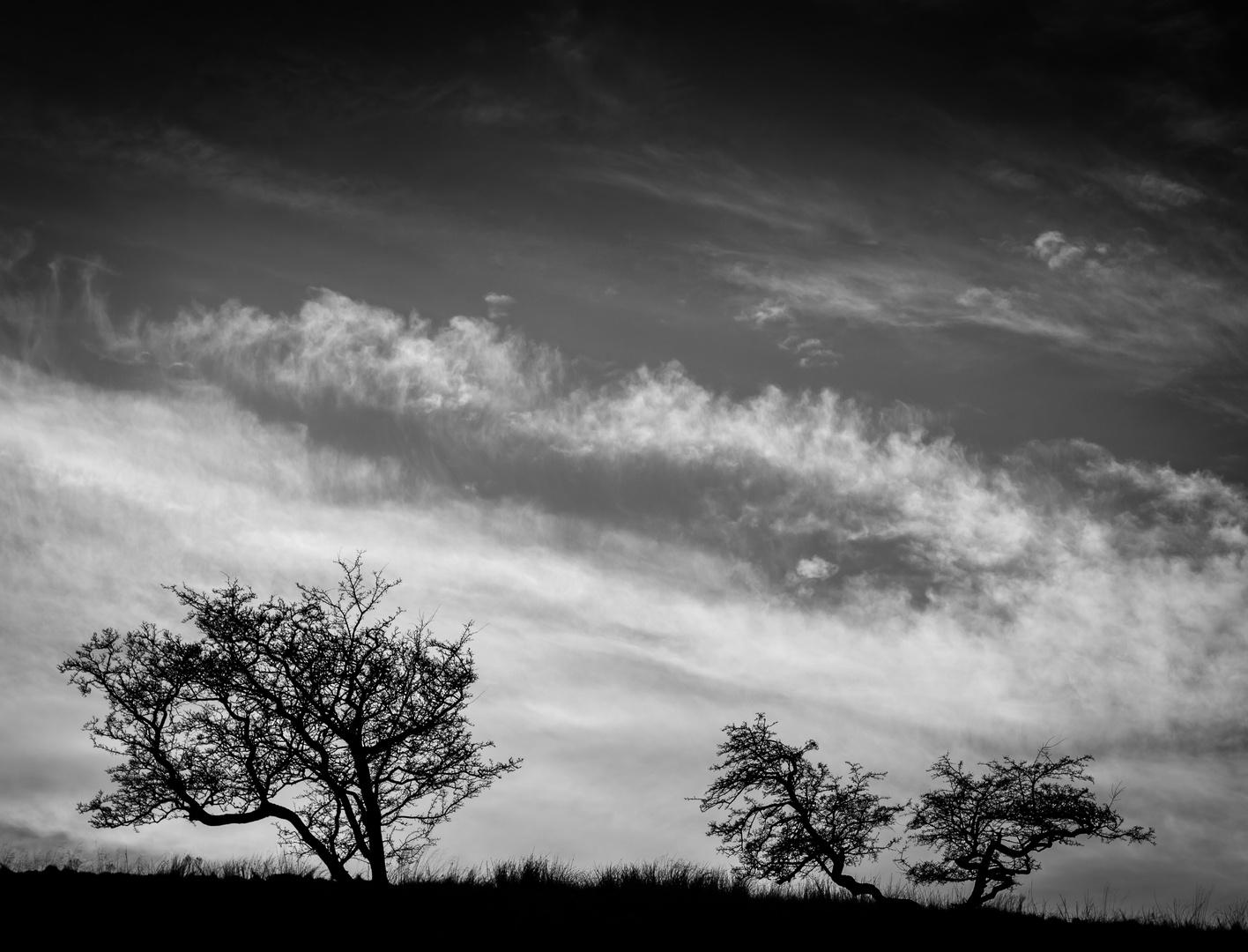 'Cloud Watching'