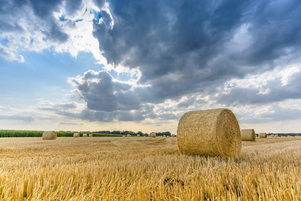 cloudy grainfield