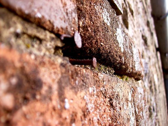 clous briques
