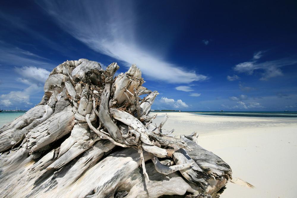 Club Faru, vicino malè, tronco lasciato dallo Tsunami