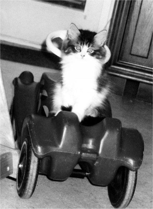 c´mon baby drive my car!