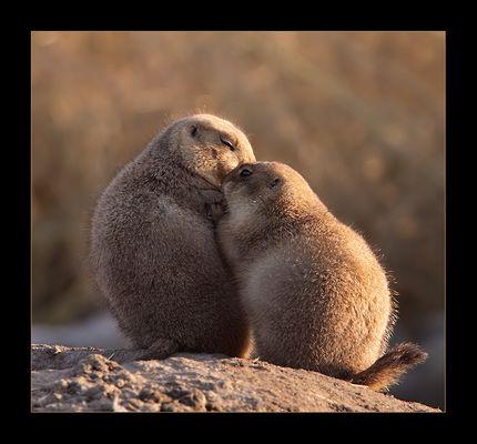 C'mon... give me a hug...