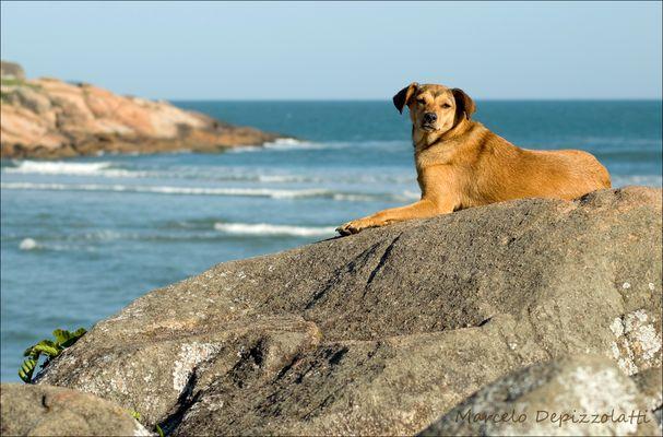 Cão ao sol - Guarda do Embaú