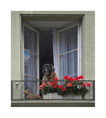 Cão & Companhia