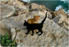 Coccole di gatta Love instinct