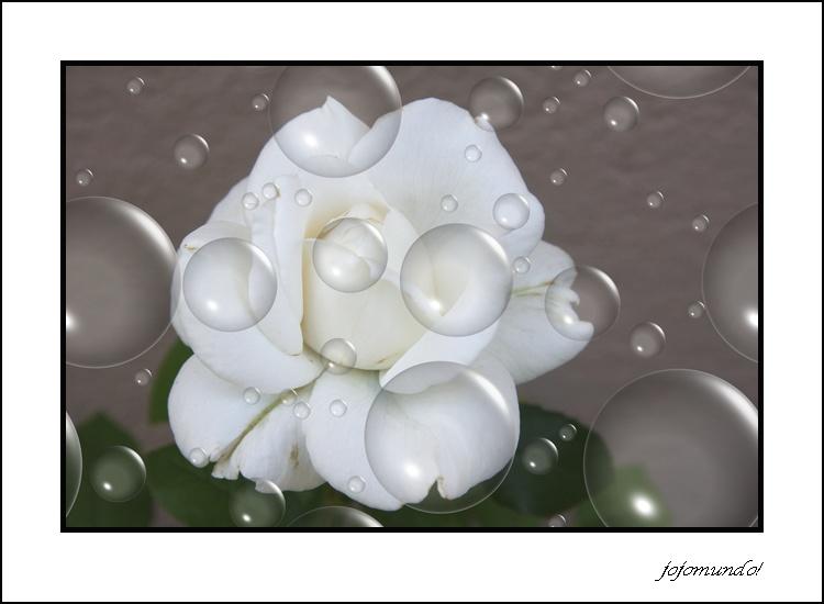 cocktail de rose blanche