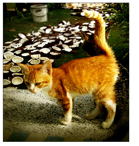 coconut cats