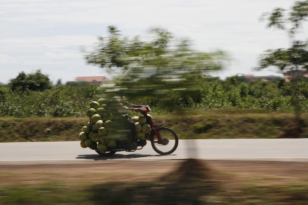 Coconuts travelling in Cambodia