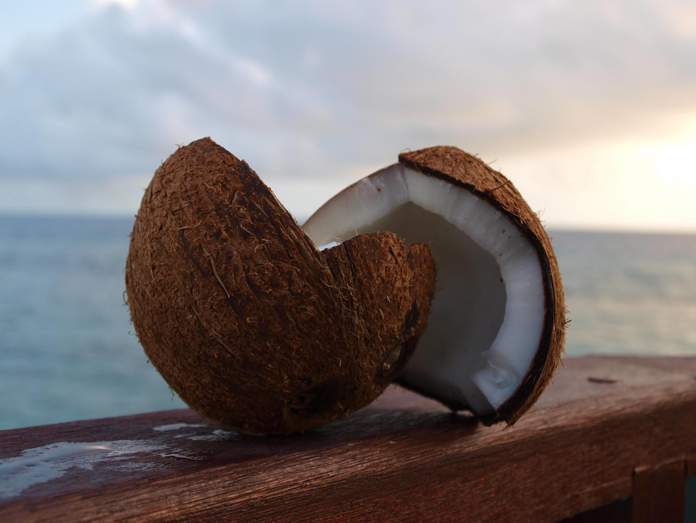 Cocos nut