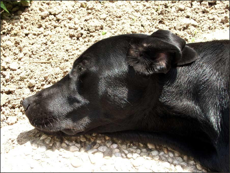 Coesfeld, 15:00 Uhr, 31 Grad im Schatten, der Hund lebt !