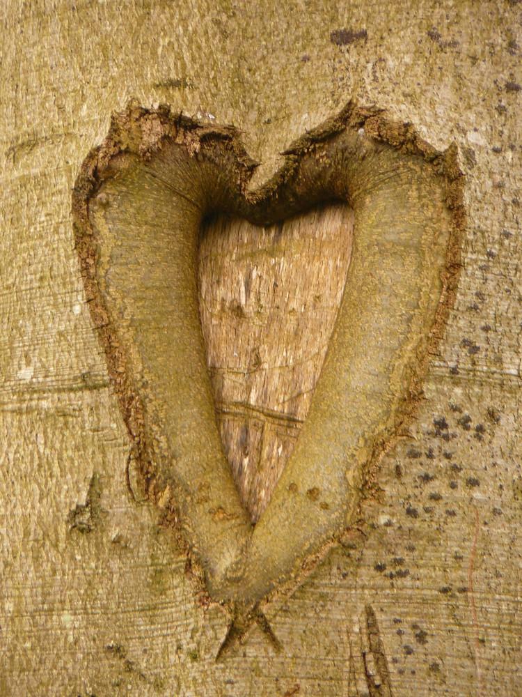 Coeur aimant......
