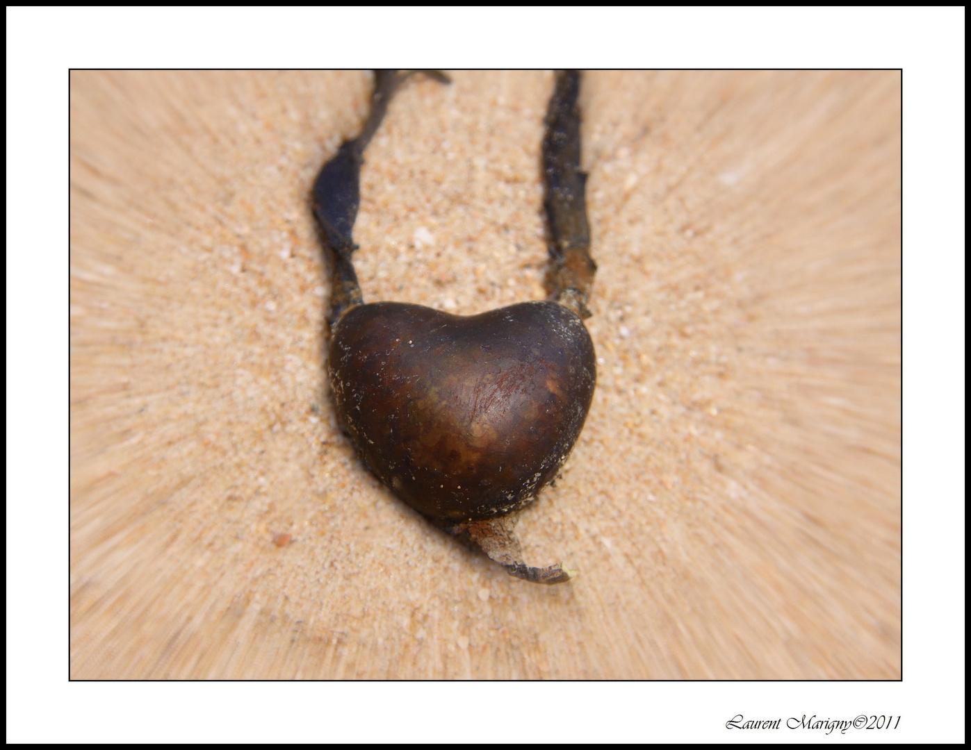 Coeur de goémon.