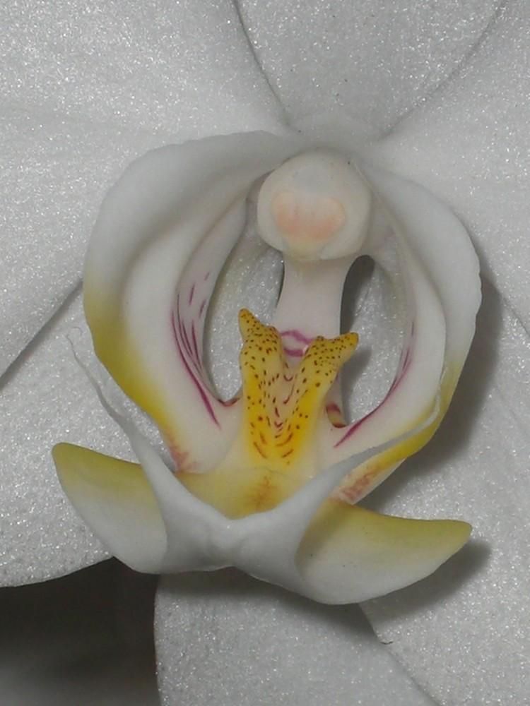 Coeur de Phalénopsis