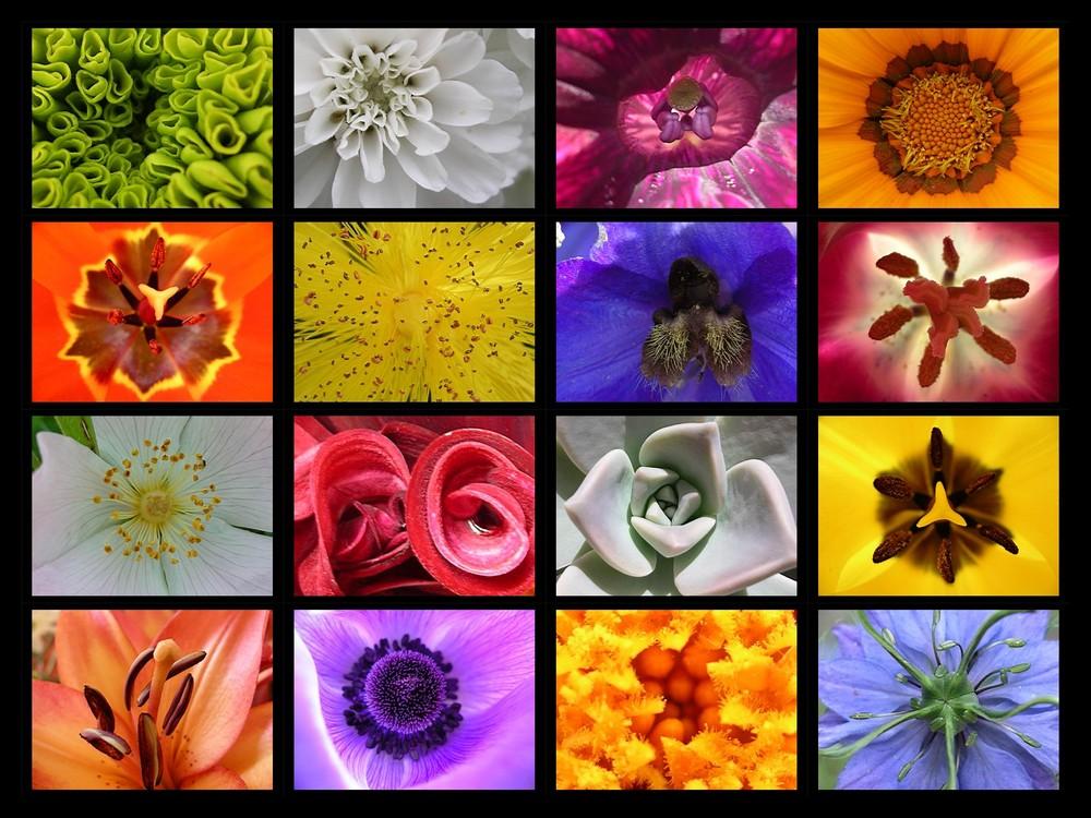 coeurs de fleur