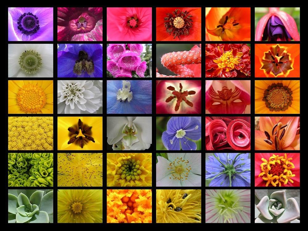 coeurs de fleurs et arc en ciel