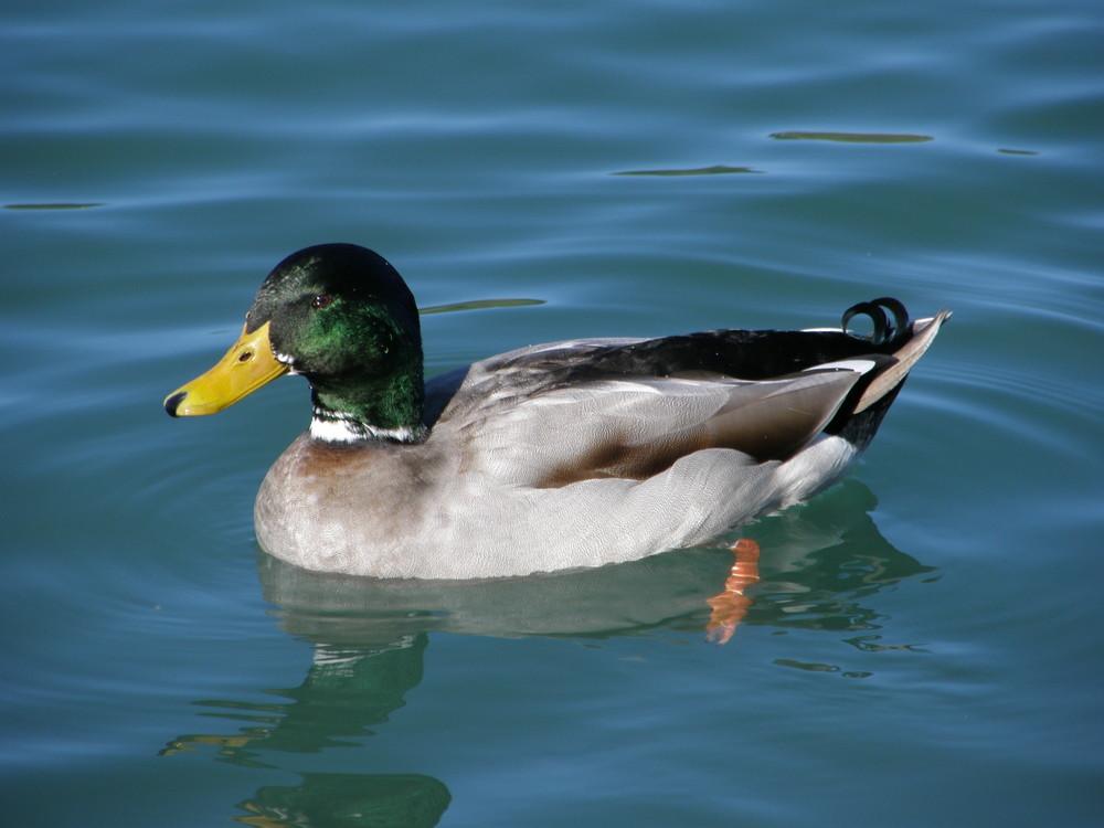 col vert sur le lac de montrejeau