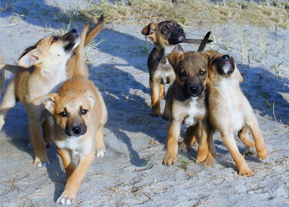 Colan - Cachorros: Bali y Sarah