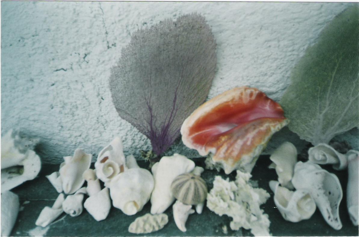 colecciones,isla mujeres mexico
