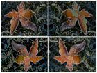 Collage Ahornblätter