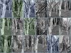 Collage Birken