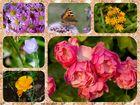 Collage Blüten