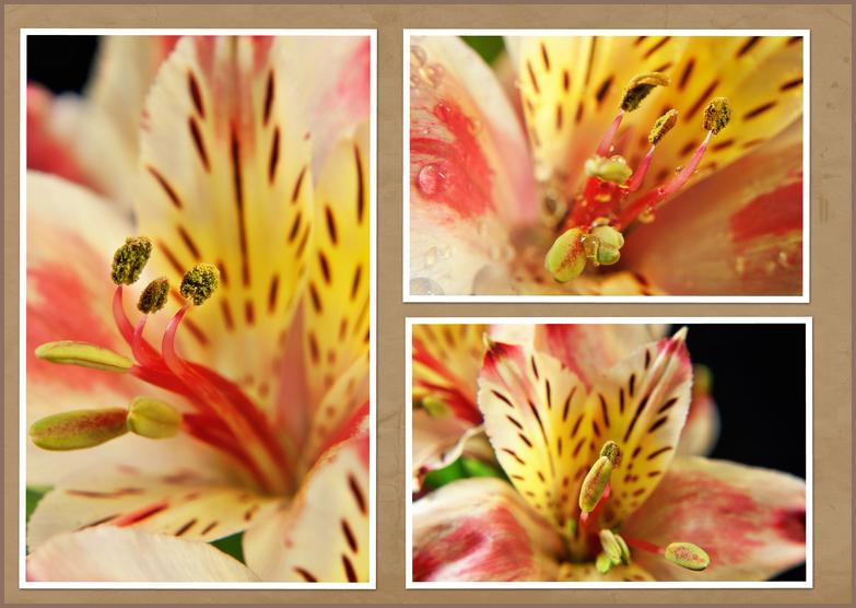 Collage einer Lilie