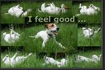 Collage: I feel good