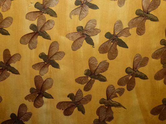 Collage Insektenschwarm