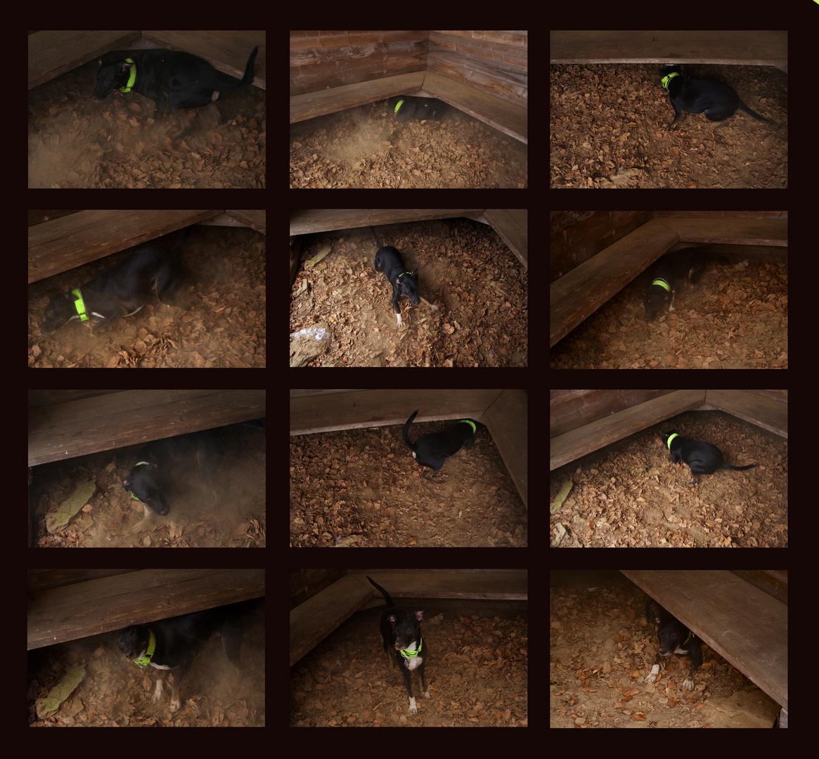Collage über den Schmutzhund