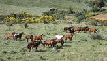 IT: Collesano in Sicilia : città dei cavalli ... più di 250 secondo il censimento von Christian Bertero