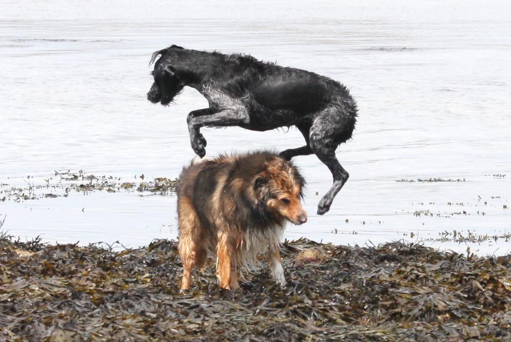 Colley-monté ou saute-colley