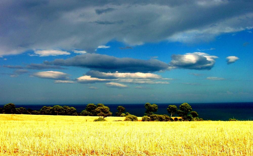 Collina di grano sul mare