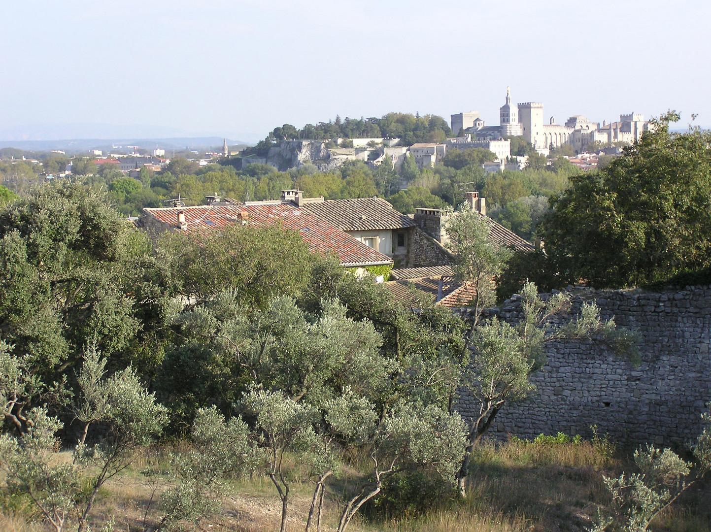 colline des mourgues oliviers et palais des papes septembre 2010