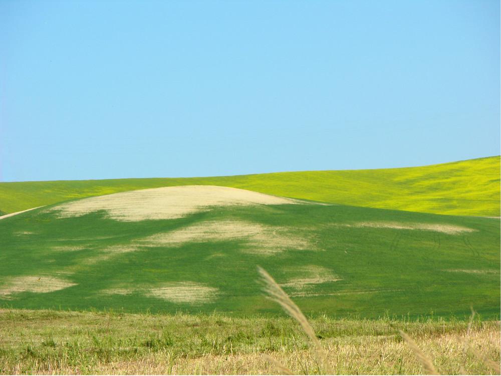 Colline di Tarquinia...dal verde irlandese