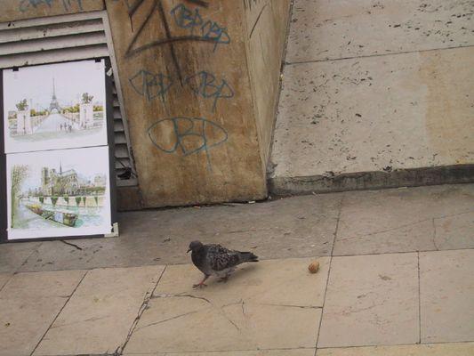 colombe à Paris