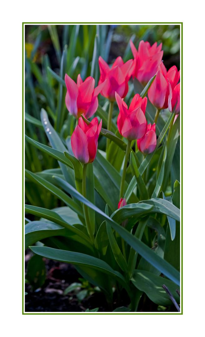 color of spring season...