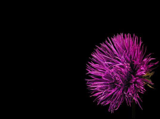 color purple II