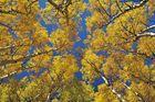 *colorado autumn sky*