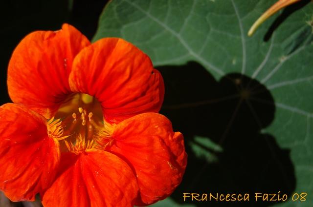 Colore_fiore