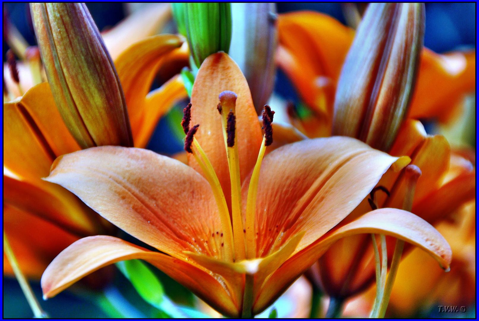 Colores de la Magia de una Flor