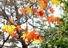 colores de otoño 2