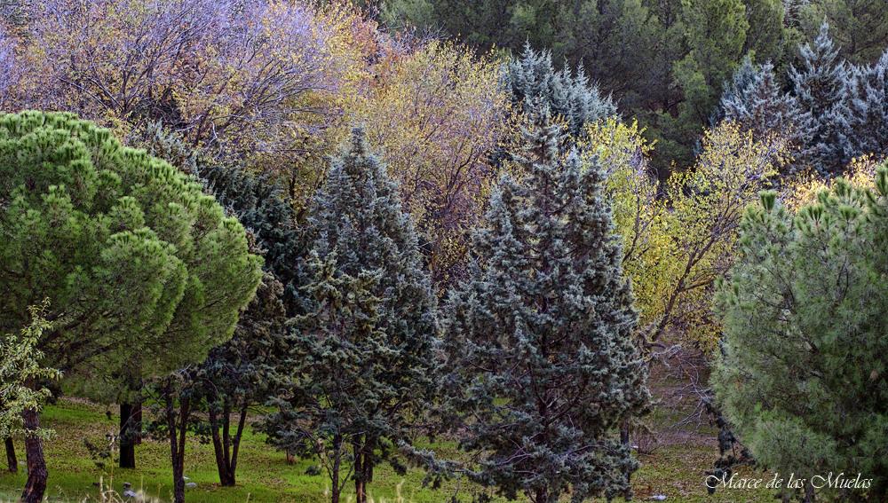 ...colores del bosque...
