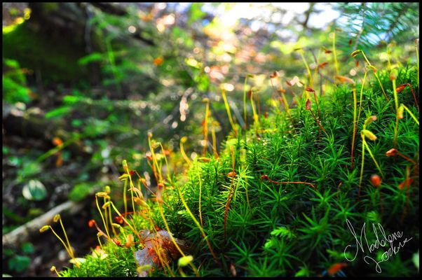 Colorful moss