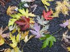 colorfull leaves